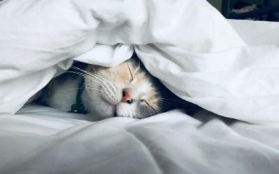 Как отличить хлопковое постельное белье от синтетического